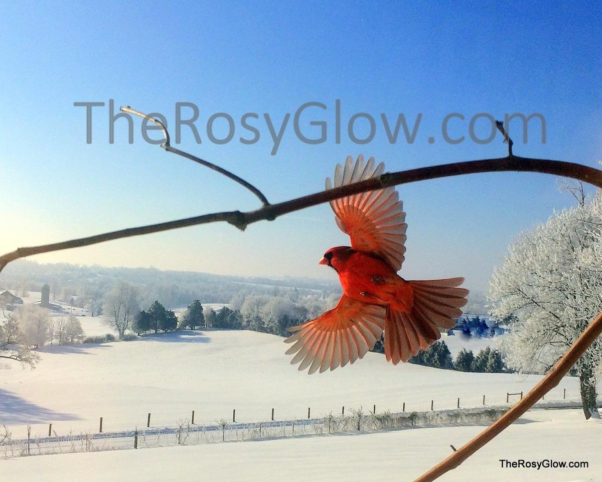 ORIGNAL  Best Sunny Snow Bird0